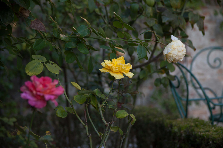 IL CANAL GRANDE SI TINGE DI ROSA contro i tumori femminili