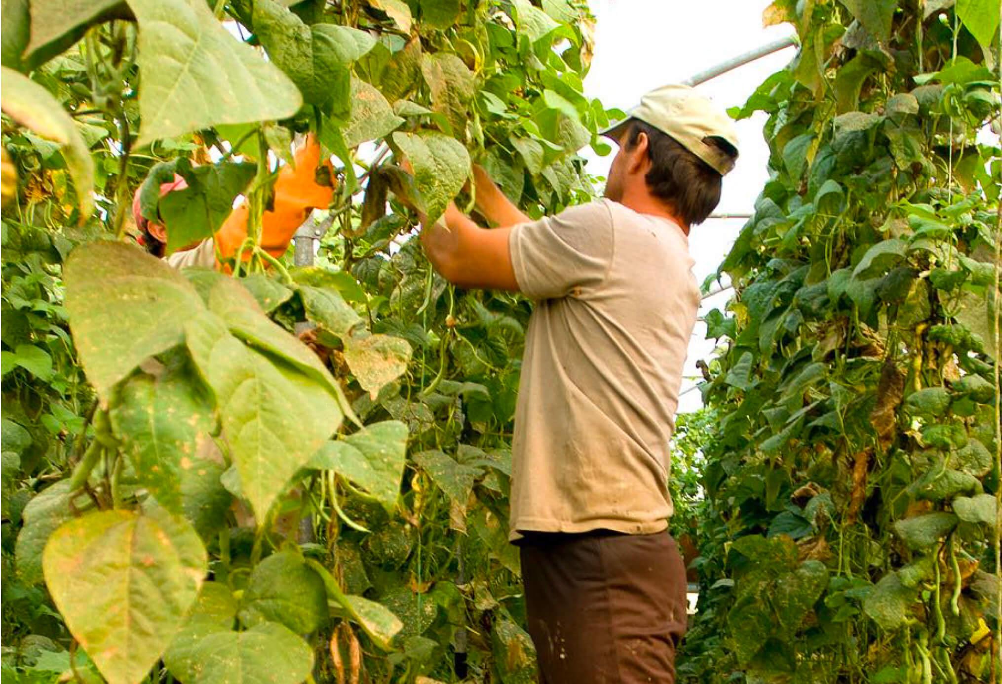 L'agricoltura ci serve ancora e anche i contadini