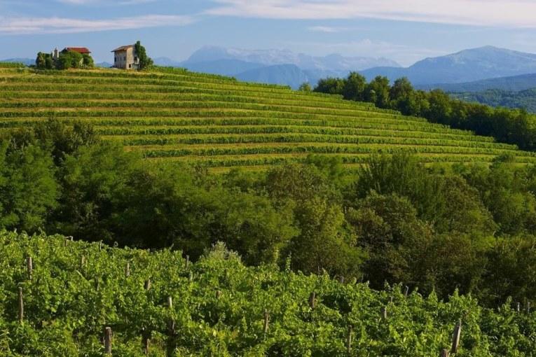 Friuli Colli Orientali e Ramandolo: il 2018, un'annata di vini da ricordare
