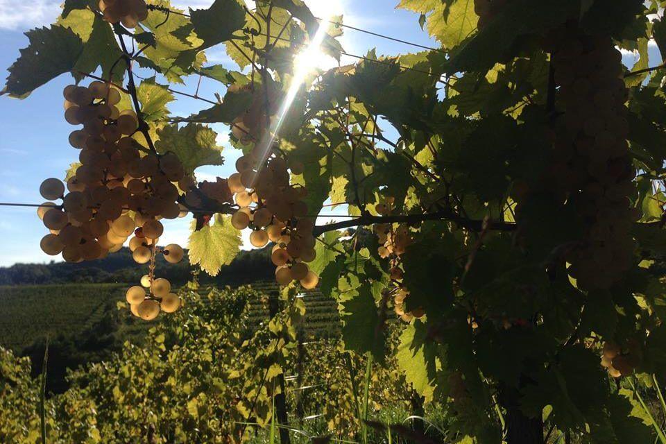 L'International Wine Tourism Conference sceglie il Friuli Venezia Giulia  come prossima sede dell'evento più importante per il  turismo enogastronomico mondiale